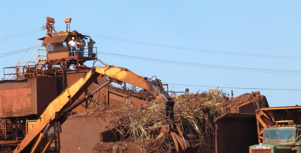 Harvesting the Cane at Gay and Robinson (Photo Coutesy Jeanne Toulon)