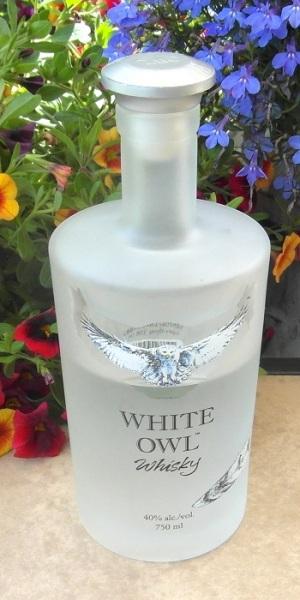 white-owl-sam_2639